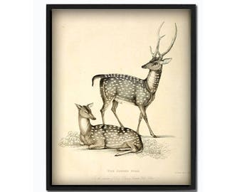 Deer print deer wall art animal print animal poster deer illustration vintage deer