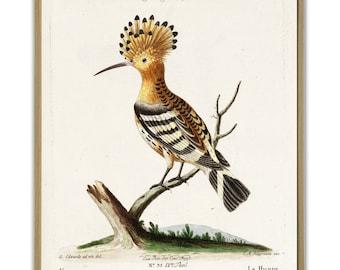 Hoopoe Bird Print, Large Wall Art Decor, Vintage Birds Poster