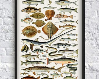 Fish Print Poster Sea Marine Wall Art Illustration Biology Antique Science Water Animal Fishing