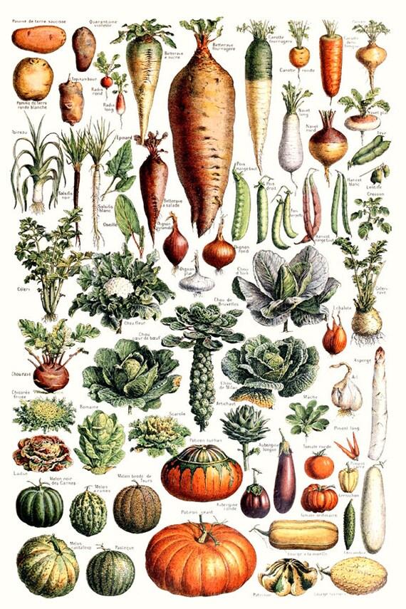 Gemüse - Gemüse Poster - Küche Wand Kunst - Küche Dekor - Kürbis Druck -  vegetarische Druck - Vitamin Poster drucken