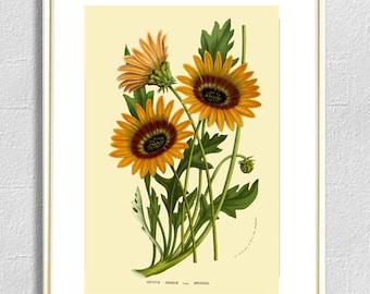 Flower print botanical  print illustrations yellow flowers print vintage antique print wall art print herb art home kitchen decor poster