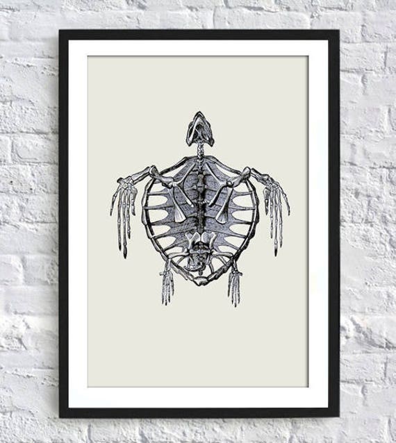 Schildkröte Skelett Druck Jahrgang Schildkröte-Dekor