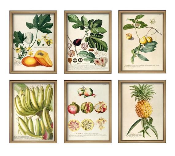 Fruit Kitchen Wall Art Print - Fruit Decor - Vintage Kitchen Decor - Set of  6 - Papaya - Pineapple - Banana - Fig - Pomegranate - Guava