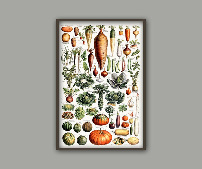 Gemüse Gemüse Poster Küche Wand Kunst Küche Dekor   Etsy