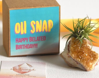 Happy Belated Birthday Gift For Friend, Happy Birthday Unique Best Friend Birthday Gift, Sister Birthday Gift, Air Plant Food, Growable Gift