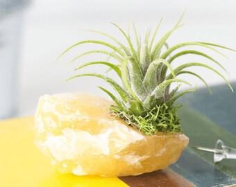 Air Plant Crystal Decor, Yellow Home Decor Cute Desk Accessories,  Succulents Terrarium, Housewarming Gift Indoor Plants Succulent Gift Plant