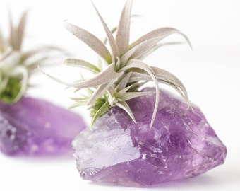 Amethyst Crystal Air Plant, Birthday Gift, Sister Gift, BFF Gift, Amethyst Geode Girlfriend Gift, Anniversary Gift, Mom Gift Purple Gift