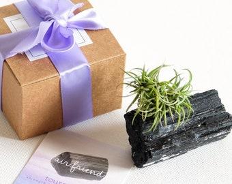 Black Tourmaline Crystal Air Plant Terrarium Cute Desk Accessories Boyfriend Gift Best Friend Birthday Christmas Ideas