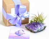 Amethyst Crystal Air Plant Gift, Desk Accessories, Housewarming, Air Plant Terrarium, Dorm Decor, Friend Gift Best Friend Birthday Gift