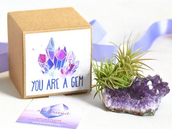 Amethyst Crystal Air Plant Birthday Gift April