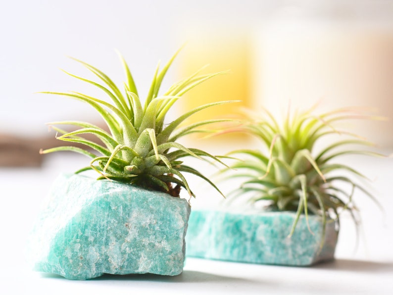 You Rock Amazonite Air Planter Best Friend Gift Thank