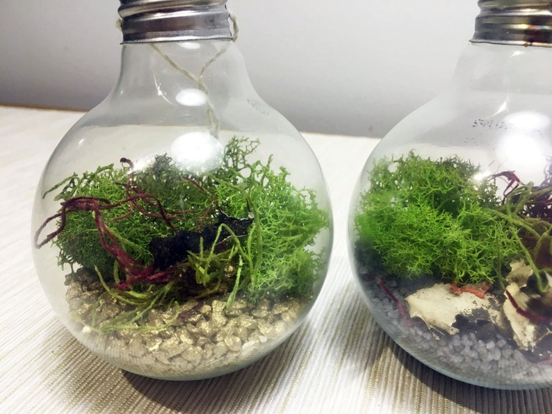 Recycled Light Bulb Terrarium Real Bulb Mini Terrarium Etsy