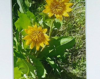 Two Sunflowers photograph /5x7 white matted / home or office decor