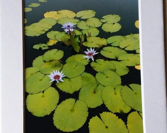 "Matted ""Lily Pads"" photograph.  5x7"