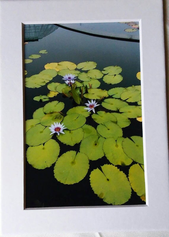 """Matted """"Lily Pads"""" photograph.  5x7"""