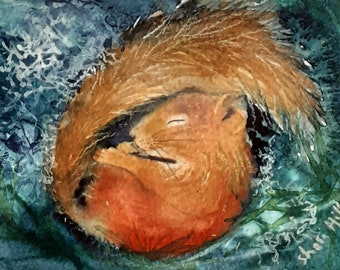 Red Squirrel Slumbers original watercolour by Shari Hills