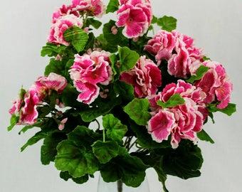 Pink Geranium Bush with white variegated petals