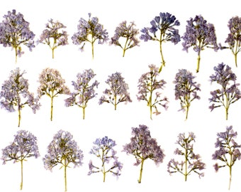 20 pcs dried pressed lilac. Wild pressed flowers. Purple Dried Pressed Flowers for Crafting. Pressed Flowers for DIY