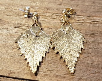 24K Gold Dipped Real Birch Tree Leaf Drop Dangle Earrings Nature Outdoor Earth Jewelry Beautiful (E294)