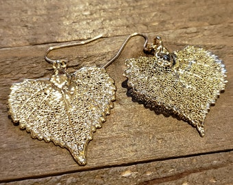 Gold Dipped Real Cottonwood Tree Leaf Drop Dangle Earrings Nature Jewelry (E279)