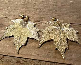 24k Gold Dipped Real Maple Tree Leaf Drop Dangle Earrings Nature Outdoor Earth Jewelry Beautiful (E299)