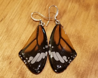 Real Butterfly Wing Earrings Preserved in Resin Nature Women Jewelry Natural Earth (E6)