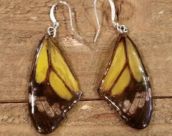 Yellow Real Butterfly Wing Earrings Preserved in Resin Nature Outdoor Women Jewelry Natural Earth Boho Hippie (E154)