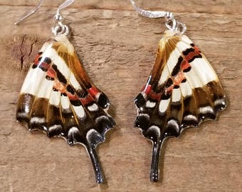 Real Butterfly Wing Earrings Preserved in Resin Nature Women Jewelry Natural Earth (E58)