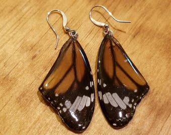 Real Butterfly Wing Earrings Preserved in Resin Nature Women Jewelry Natural Earth (E7)