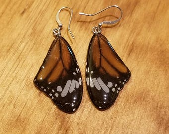Real Butterfly Wing Earrings Preserved in Resin Nature Women Jewelry Natural Earth (E5)