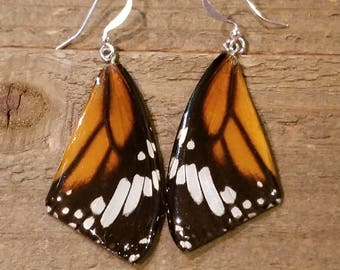 Real Butterfly Wing Earrings Preserved in Resin Nature Women Jewelry Natural Earth (E59)