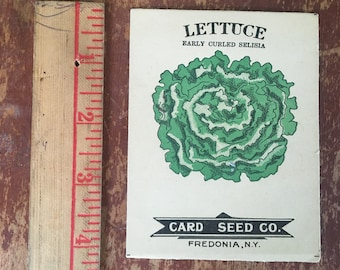 Lettuce, Early Curled Selisia. Fredonia Seed Card Co. Lithograph 1910 Empty Seed Packet