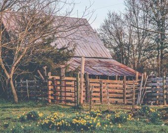 Flowers & Rust Photograph - Barn photograph - Farmhouse decor - Fine art print - Rustic decor - Gallery wall - Spring - Wildflowers