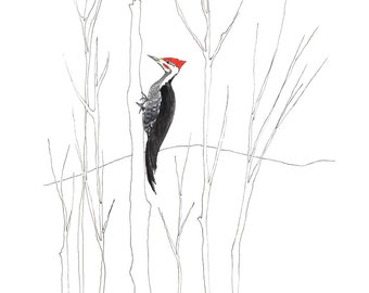 Pileated Woodpecker Greeting Card (Package of 5)