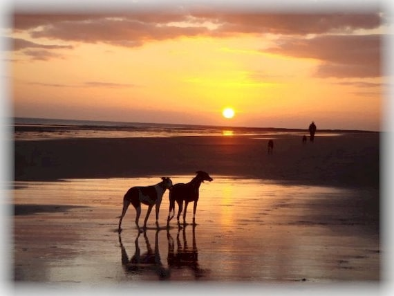 GREYHOUND SUNSET Set of 10 Note Cards With Envelopes