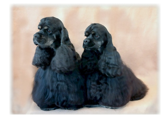 American Cocker Spaniel Black Note Cards Etsy