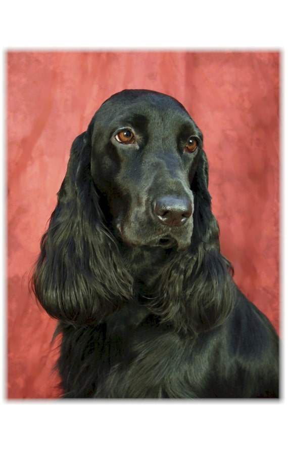 English Cocker Spaniel Black Note Cards Etsy