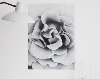 Black & white rose - Fine Art digital print