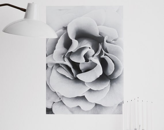 Black & white rose - Fine Art digital print