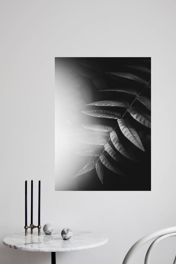 black and white jungle - fine art digital print - hahnemuehle fine art photo rag - 50 x 70 cm