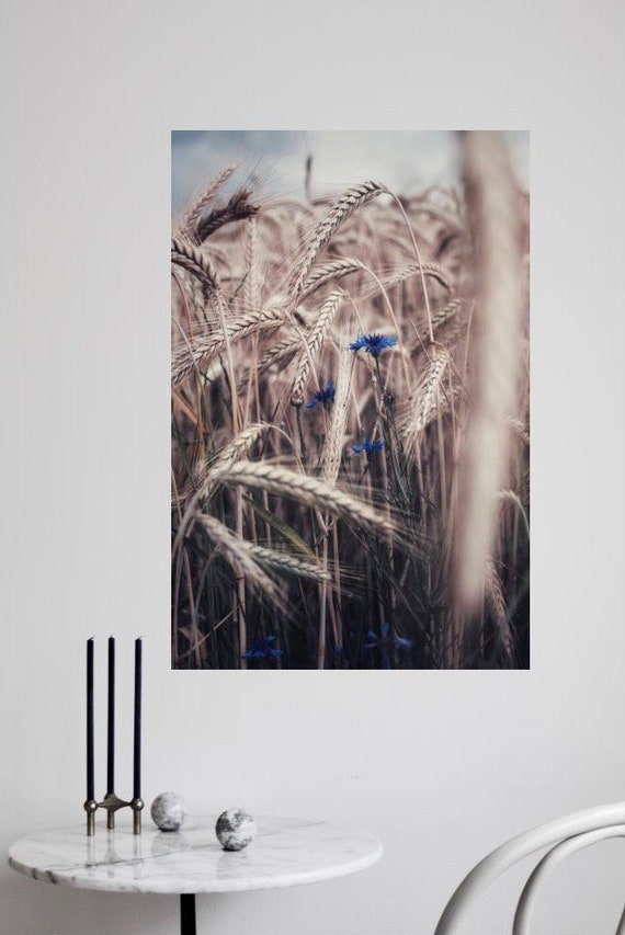 Cornfield - Fine Art digital print