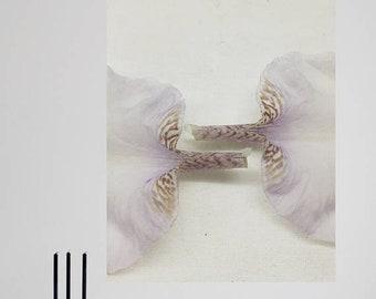 Iris II - Fine Art digital print