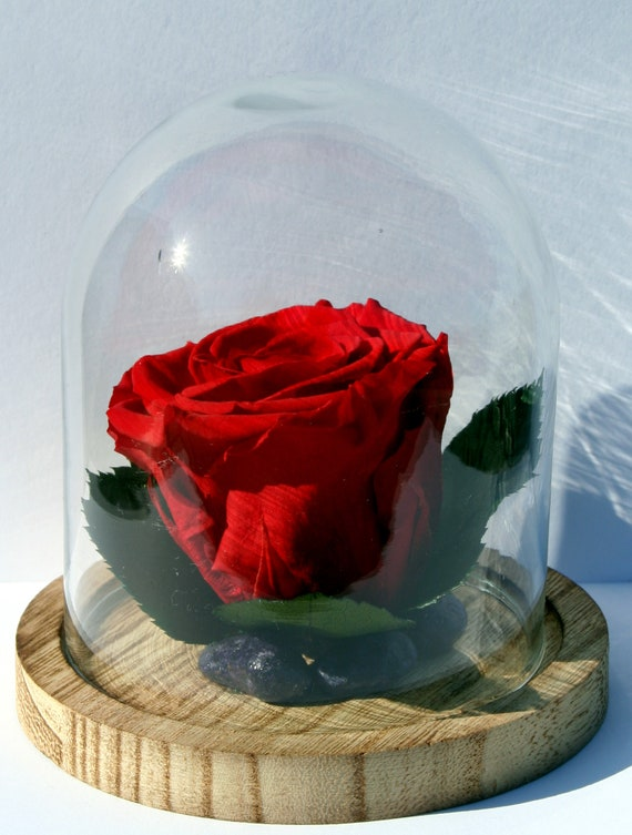 Rose Eternelle Stabilisee Globe Etsy