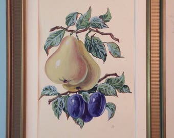 Vintage framed original watercolor still life of pears and plums hanging from branch