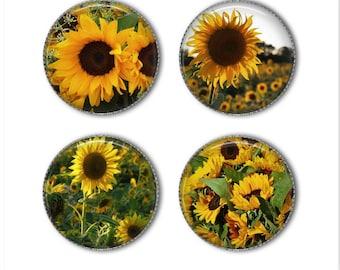 Sunflower magnets or sunflower pins, refrigerator magnets, fridge magnets, office magnets