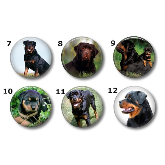 Rottweiler magnets or pins Choose your own set of 6  8a0f9008249