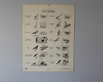 Vintage Nests of Birds wall chart from Turtox