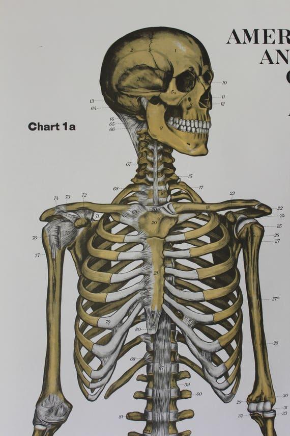Amerikanischen Frohse menschliche Anatomie Wall Chart-Platte 1 | Etsy