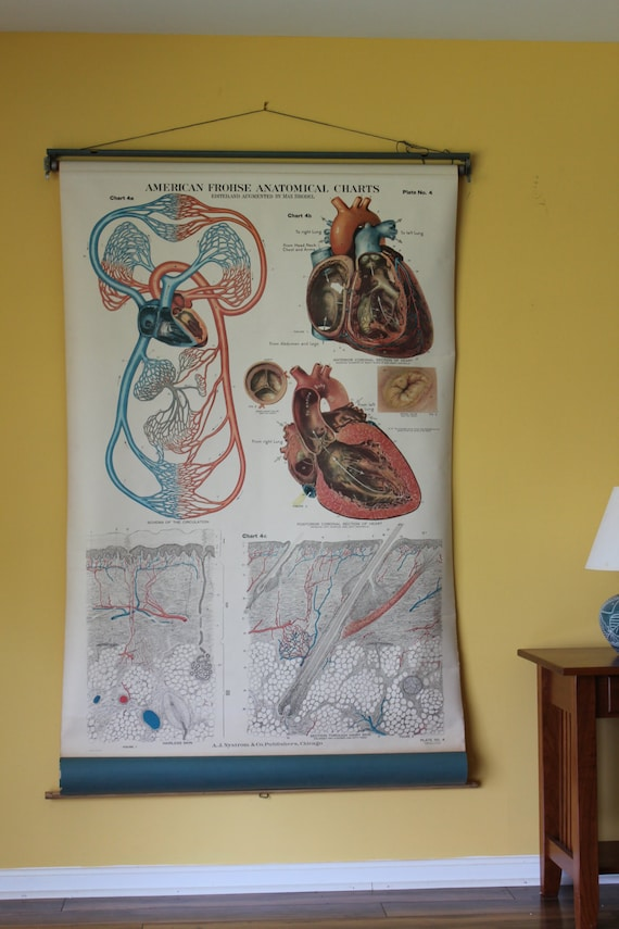 American Frohse Human Anatomy Wall Chart Plate 4 Heart Etsy