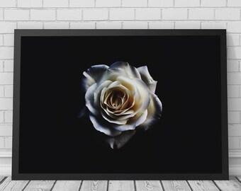 Rose Art Print, Rose, Rose Art, Rose Print, Rose Photography, Flower, Flower Print, Printable Digital Download, Photography